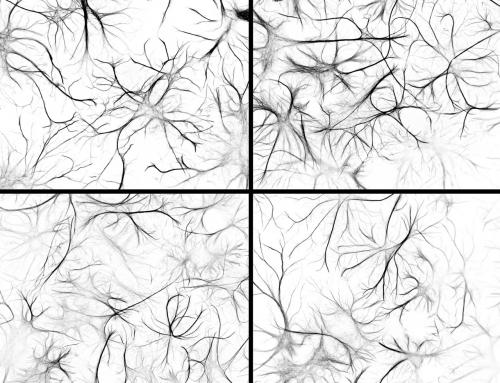 Cultured astrocytes