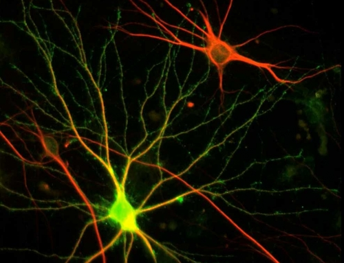 Movie: Neurons and Synapses, Pt. 2, Legends and Credits